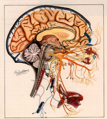 Neurovascular Conflict