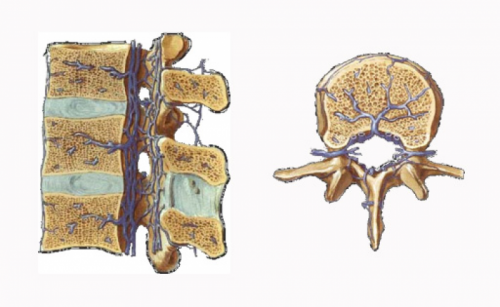 Batson's epidural venous plexus